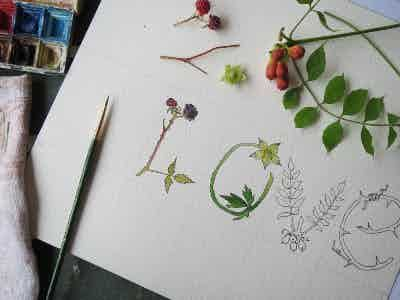 Botanical Letters Drawn from Life